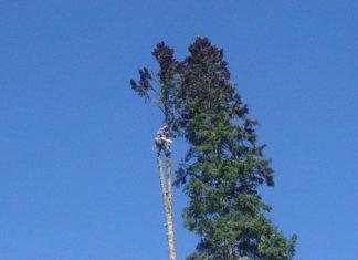 Migliori ramponi per alberi