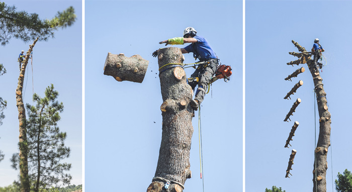 Ramponi per alberi